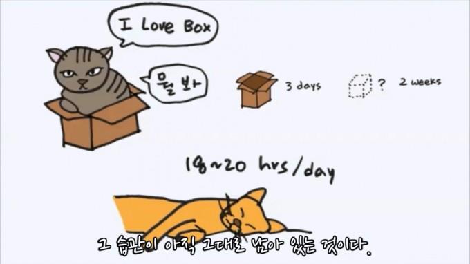 박스 속에 자리잡는 고양이의 '박스 사랑'에서도 고양이의 야생성을 엿볼 수 있다