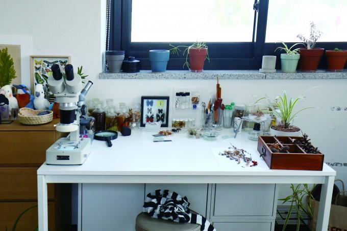 현미경과 돋보기, 알콜 램프, 서랍과 병에 담긴 식물표본 등 식물세밀화가의 작업실은 여느 화가의 화실과는 다르다.
