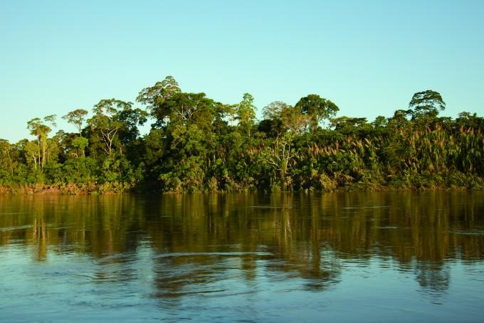 아마존강으로 이어지는 갈색의 강 탐보파타강. 그 주변에 펼쳐진 울창한 나무들과의 첫 만남은 감격 그 자체였다. - 전종윤 연구원 제공