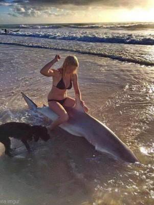 상어와 개와 사람 '슬픈 사진'