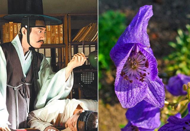 영화 '조선명탐정: 각시투구꽃의 비밀'의 한 장면과 각시투구꽃의 실제 모델인 바꽃. - 쇼박스·메가박스중앙㈜플러스엠