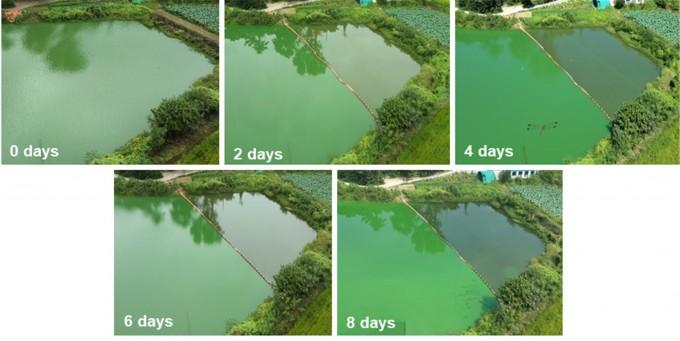한양대 연구진은 새로운 녹조제거 기술을 개발하고 경기도 용인시 기흥저수지에서 실증실험을 진행했다. 새로운 녹조제거제를 살포한 구역은 시간이 지남에 따라 점차 초록색이 옅어지는 것을 볼 수 있다. 한양대 제공.