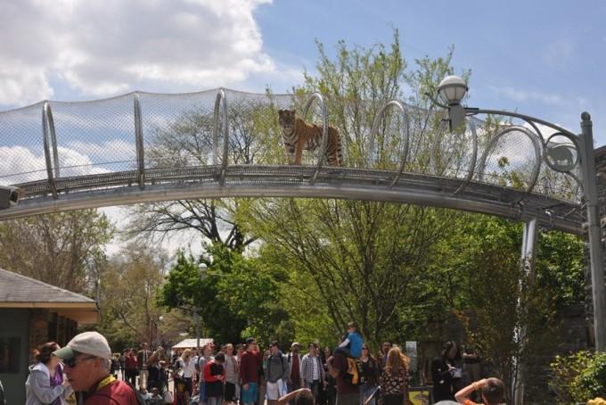 미국 필라델피아 동물원. 사람들 머리 위로 사자, 호랑이 등이 자유롭게 다닌다. - pinterest