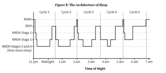 1953년 잠이 렘수면과 비렘수면으로 이뤄져 있고 대략 90분 주기로 반복된다는 사실이 밝혀졌다. 잠의 구조는 울트라디언리듬의 대표적인 예다. - 'Why We Sleep'제공