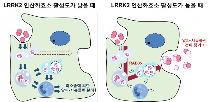 서울대팀, 파킨슨병 조절하는 유전자 작용 원리 규명