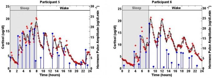 건강한 여성 두 명의 코르티솔 혈중 농도 변화를 보여주는 그래프로 10분 간격으로 측정한 데이터(빨간색 점)를 바탕으로 만들었다. 24시간 일주기리듬을 보이는 가운데 그보다 짧은 주기의 울트라디언리듬도 존재함을 알 수 있다. 부신피질에서 분비되는 코르티솔은 HPA축에 따라 조절되므로 H(시상하부)에서 두 리듬을 발생시킬 가능성이 크다. 실제 일주기리듬을 일으키는 시교차상핵이 시상하부에 있다. - 'PLOS ONE' 제공