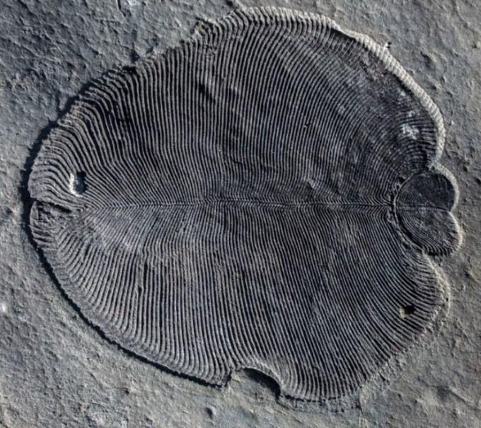 역대 가장 오래된 다세포 동물 화석 발견