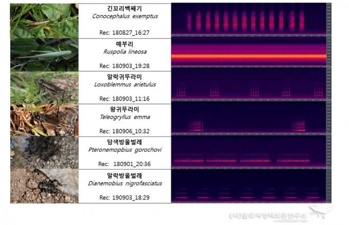 6종 곤충의 소리 주요 주파수 Spectrogram