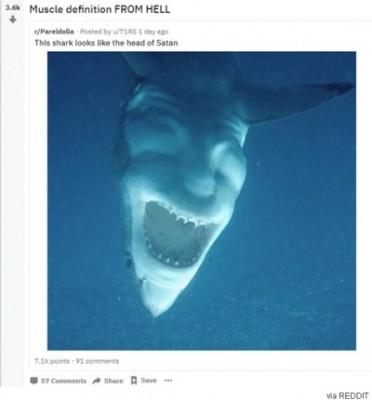 상어와 악마의 얼굴