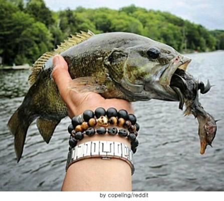 오리 잡아먹은 물고기