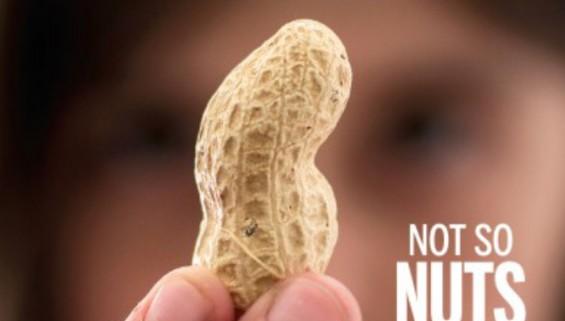 [표지로 읽는 과학] 땅콩 알레르기 잡는 치료제 나온다