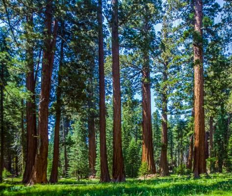 '바이오연료'만들고 남은 나무 찌꺼기로 고부가가치 물질 만든다