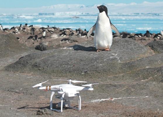 드론이 간다, 남극 펭귄 찾으러!