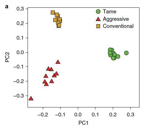 은여우 세 그룹 30마리의 게놈을 분석해 주요 특징을 추출한 뒤 2차원 좌표에 나타냈다. 각 그룹의 열 마리가 한 데 묶임을 알 수 있다. 길들인 은여우(tame)와 선별하지 않은 은여우(conventional) 사이의 거리가 사나워진 은여우(aggressive)와 선별하지 않은 은여우(conventional) 사이의 거리보다 더 멀다. - 네이처 생태학 및 진화' 제공