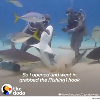 상어 입속에 손을 집어넣은 이유