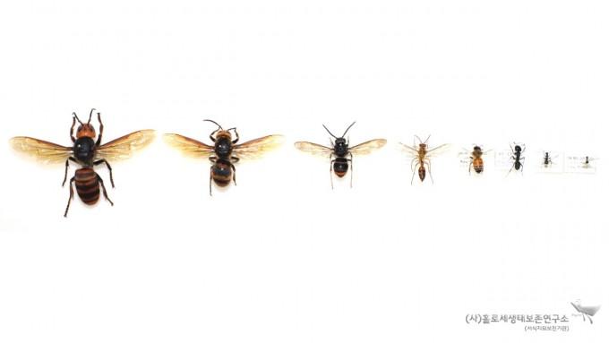 벌과 개미 비교