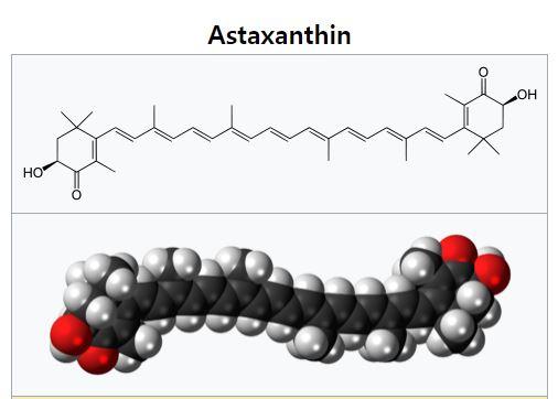 최근 주목받고 있는 카로티노이드인 아스타잔틴의 분자 구조. 다른 카로티노이드는 짝이중결합(conjugated double bond)이 11개인 반면 아스타잔틴은 13개에 이른다. 아스타잔틴은 세포막 성분인 지질의 산화를 막아주는 강력한 항산화제다. -위키피디아 제공