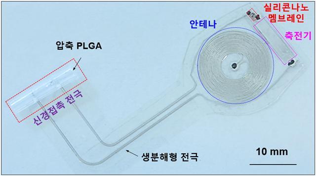 생분해성 전자약 구조. 전체 크기는 어른 엄지손가락 정도이고, 두께는 0.3mm이다. -사진 제공 KAIST