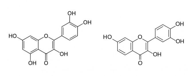 지난 수년 사이 노화 세포만을 선별적으로 죽이는 세놀리틱 화합물이 몇 가지 밝혀졌다. 이 가운데 케르세틴과 피세틴은 식물에 들어있는 천연 플라보노이드로 많이 섭취해도 별다른 부작용이 없는 것으로 알려져 있어 현재 사람을 대상으로 임상이 진행되고 있다고 한다. 왼쪽은 케르세틴, 오른쪽은 피세틴의 분자구조로 매우 비슷하다. 제공 위키피디아