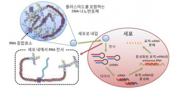 치료용 유전물질 세포에서 생산한다