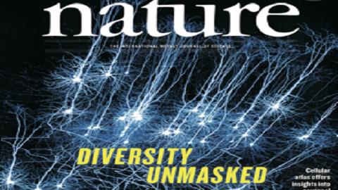 [표지로 읽는 과학] 신경세포 분류학 시대 열린다