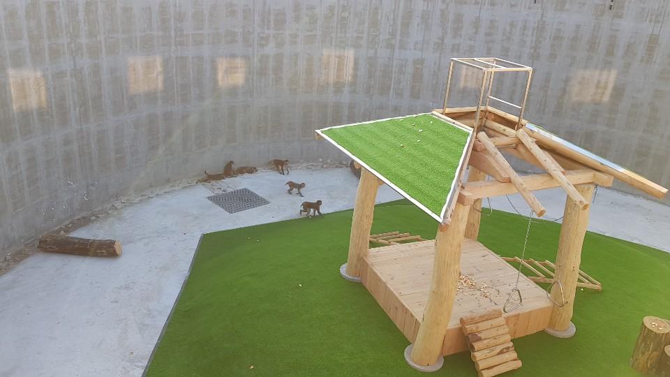 5일 언론에 공개된 정읍 영장류자원지원센터에 마련된 야외 사육시설에서 붉은털원숭이들이 무리를 이뤄 이동하고 있다.