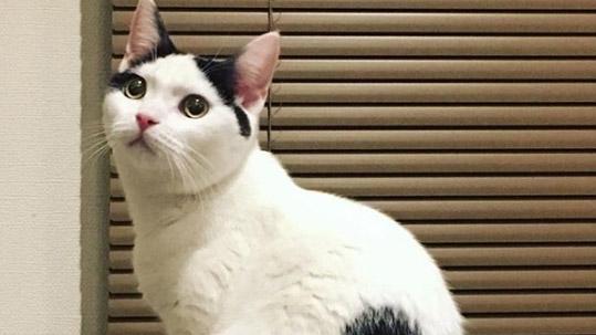 등에 하트가 선명한 고양이'인기'