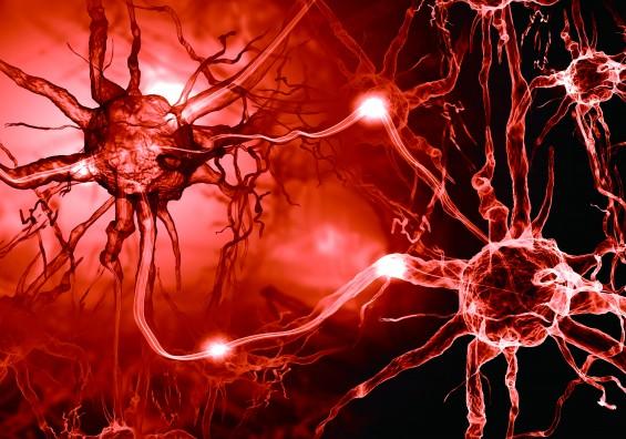 뇌파 생성 신경회로 찾았다