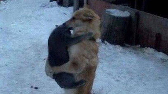 개와 고양이의 뜨거운 포옹