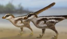 길이 1cm 세계에서 가장 작은 '랩터' 발자국 화석 진주에서 발견