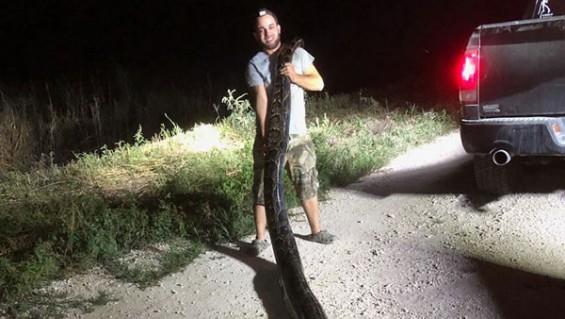 미국에서 5.3미터 대형 뱀 잡혀