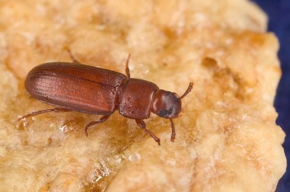 무더위 때문에… 번식력 떨어진 수컷 곤충