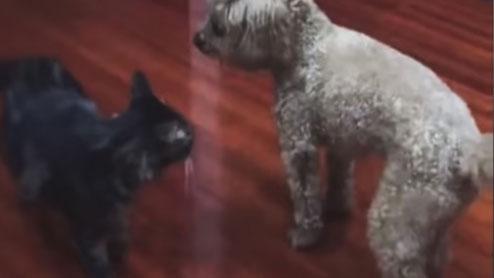 고양이를 패대기친 강아지