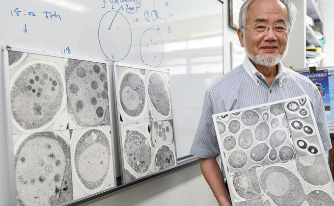 올해까지 일본에서 탄생한 노벨 과학상 수상자는 23명에 이른다. 사진은 오토파지(자가소화작용)의 메커니즘을 발견한 공로를 인정받아 2016년 생리의학상을 수상한 오스미 요시노리 도쿄 공업대 명예교수. Akiko Matsushita, Science 제공