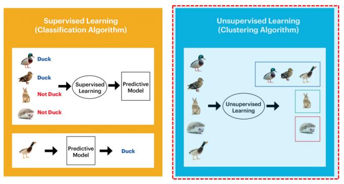 딥러닝(심층기계학습) 방식의 인공지능(AI)에 활용되는 지도학습(왼쪽)과 뉴로모픽 컴퓨팅에 활용되는 비지도학습(오른쪽)의 차이. 지도학습은 사람이 일일이 정답과 관련된 정보를 입력하는 라벨이 필요한 반면, 뉴로모픽 칩은 인간의 뇌처럼 다양한 정보를 비슷한 특징별로 스스로 분류해 기억한다. 사람 뇌처럼 정보를 사건(이벤트) 단위로 받아들이기 때문에 시각과 청각, 후각 등 다양한 패턴의 데이터를 동시다발적으로 신속하게 처리할 수 있다. - 자료: 웨스턴디지털