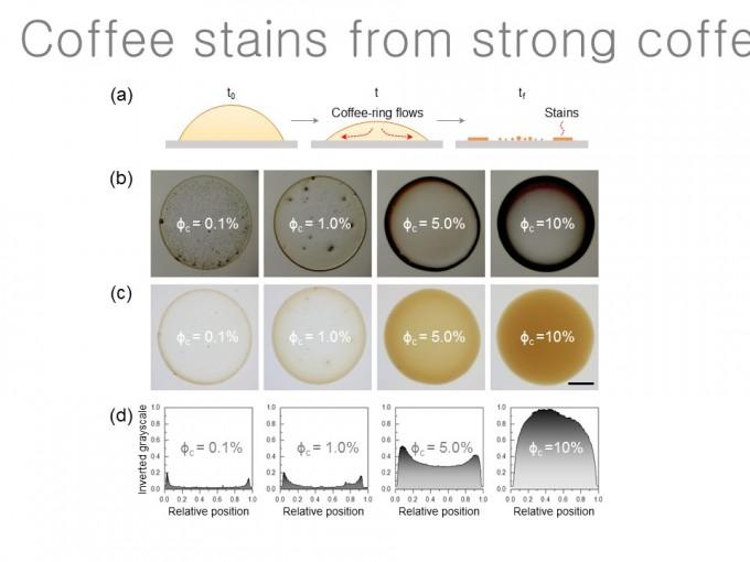 커피 농도에 따른 얼룩 형성 패턴 변화. 오른쪽으로 갈수록 커피얼룩효과가 사라진다. - 사진 제공 원병묵 교수