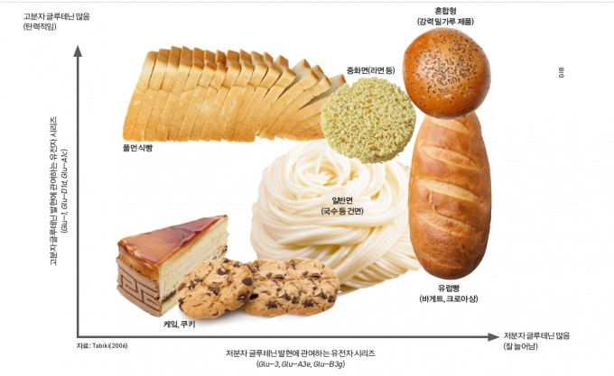 빵의 맛을 결정하는 밀의 글루텐 단백질 조합. 밀 단백질은 글루테닌과 글리아딘 두 개의 주된 단백질로 구성돼 있다. 글루테닌은 다시 고분자와 저분자로 나뉘는데, 고분자 글루테닌은 탄성, 저분자 글루테닌은 신장성에 주로 관여한다고 알려져 있다. 이 둘의 유전적 변이가 밀 반죽의 물성 변화와 가공성에 영향을 준다.