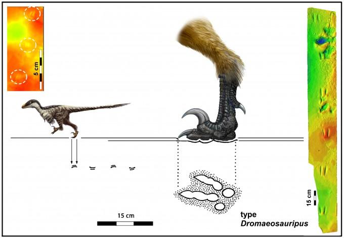 소형 랩터 공룡 발자국 화석을 근거로 복원한 소형 랩터 공룡의 모습(좌)과 랩터 발자국 화석의 3D 이미지. -사진 제공 김경수 교수/그래픽 Lida Xing