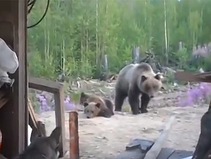 곰이 사람들을 습격하는 순간 '포착'