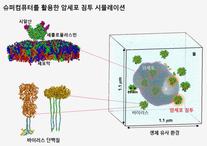 슈퍼컴퓨터 5호기를 이용하면 수백 억 개 입자를 이용해 세포와 바이러스를 3차원(3D)으로 구현하고 바이러스가 어떻게 암세포 표면을 뚫고 들어가 약물을 전달할 수 있는지 예측할 수 있다. 7.5PF(페타플롭스) 이상의 성능 필요하다. 신약 개발, 암세포 전이 과정 및 치료법 연구 등에 활용된다. - 자료: 울산과학기술원