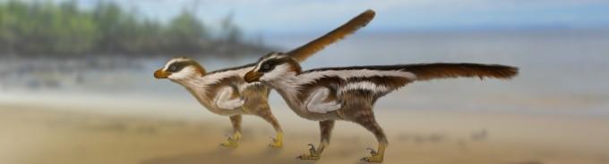 이번에 발견된 ′드로마에오사우리포미페스 라루스′를 복원한 모습. 참새 몸집의 작은 랩터 류 공룡으로 추정된다. - 사진 제공 김경수 교수/복원도 Dr. Anthony Romilio