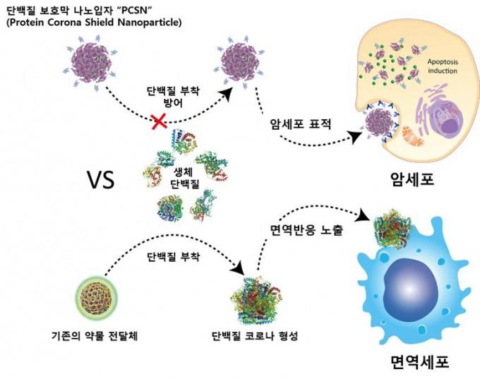 단백질 보호막 항암제 약물 전달체의 작용 원리. 울산과학기술원 제공.