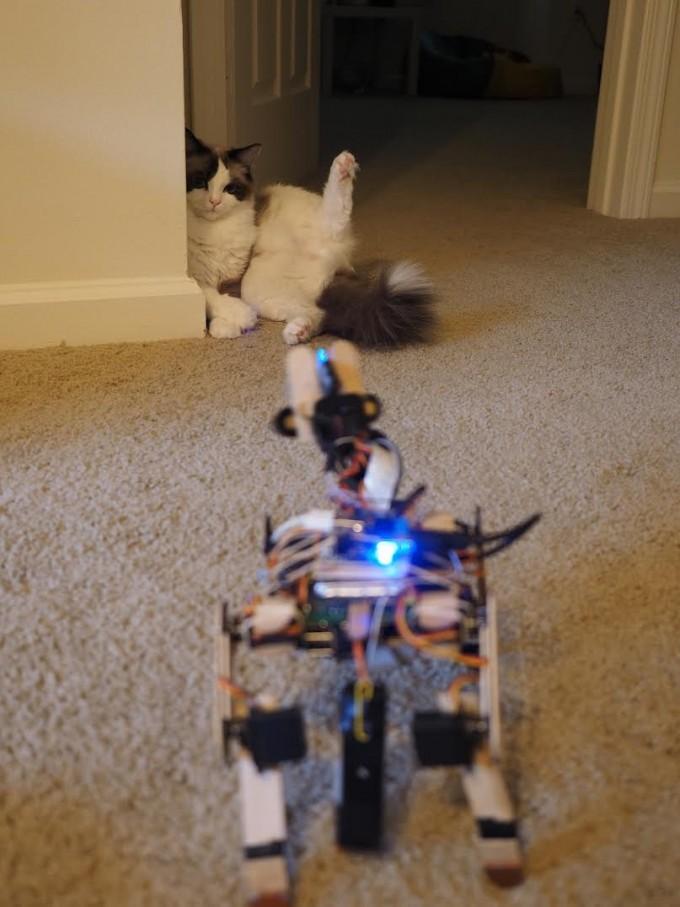 실제 고양이가 니블을 만난다면? 펫토이에 따르면 고양이가 로봇을 무척 경계했다고 합니다. 펫토이 제공