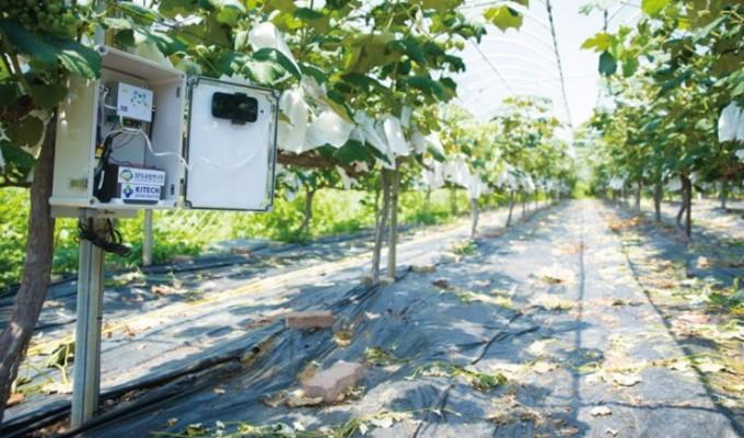 한국생산기술연구원의 양승환 연구원이 화성 포도 농가에 설치한 센서. 양승환 제공