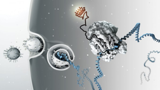 RNA 간섭을 이용한 약물이 처음으로 미국식품의약국의 시판 허가를 받았다-Science 제공