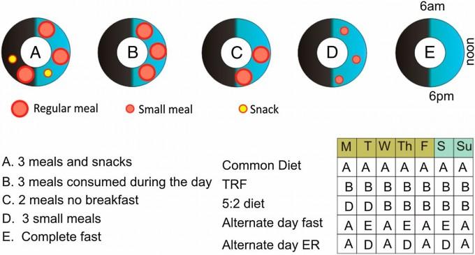 위의 도형은 하루의 섭식 패턴 다섯 가지다. A는 대사질환이 만연한 현대의 전형적인 패턴으로 저녁이 늦고 야식까지 먹는다. B와 C는 시간제한섭식으로 는 12시간 이내에 세끼만 먹고 C는 아침을 거르고 8시간 이내에 두끼만 먹는다. D는 세끼를 먹되 하루 권장량의 25% 수준이다. F는 하루 종일 굶는 경우다. 오른쪽 아래 도표는 요일별 식단으로 위에서 두 번째 줄이 시간제한섭식(TRF)이고 아래 세 가지가 간헐적 단식의 다른 버전이다. 최근 연구에 따르면 아침을 거르는 시간제한섭식(C)은 효과가 없거나 해로울 수도 있다. '미국립과학원회보' 제공