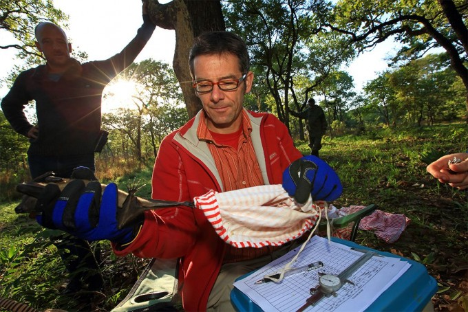 생물학자 마틴 위켈스키는 잠비아에서 박쥐에 태그를 달아 추적하는 연구를 하고 있다. -크리스티안 지글러 제공