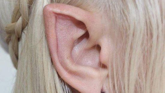 '신비로운 요정의 귀' 실물일까