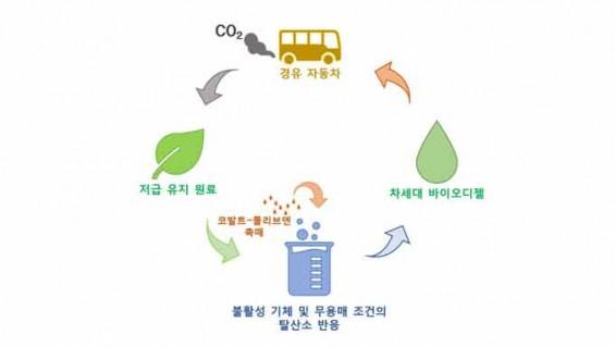 못 먹는 식물성 기름으로 차세대 바이오디젤 만든다