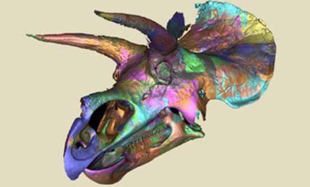 트리케라톱스의 두개골을 컴퓨터 단층촬영으로 촬영했다.-스미소니언국립자연사박물관 제공